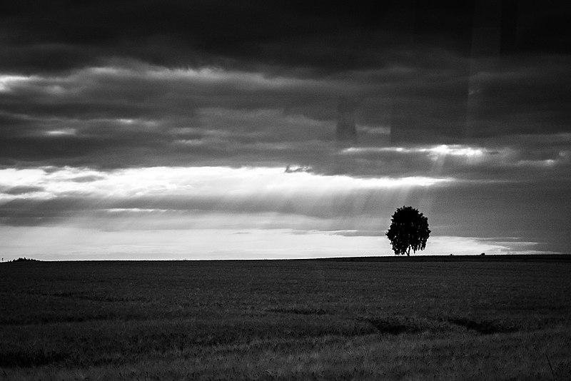 simple single solitary tree on a bare landscape
